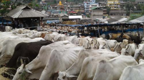 Demthring butchers warn against dumping of dead carnal 1
